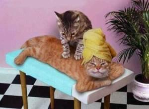 https://pjsandyogapants.files.wordpress.com/2012/09/cat2bmassage2b1.jpg?w=300